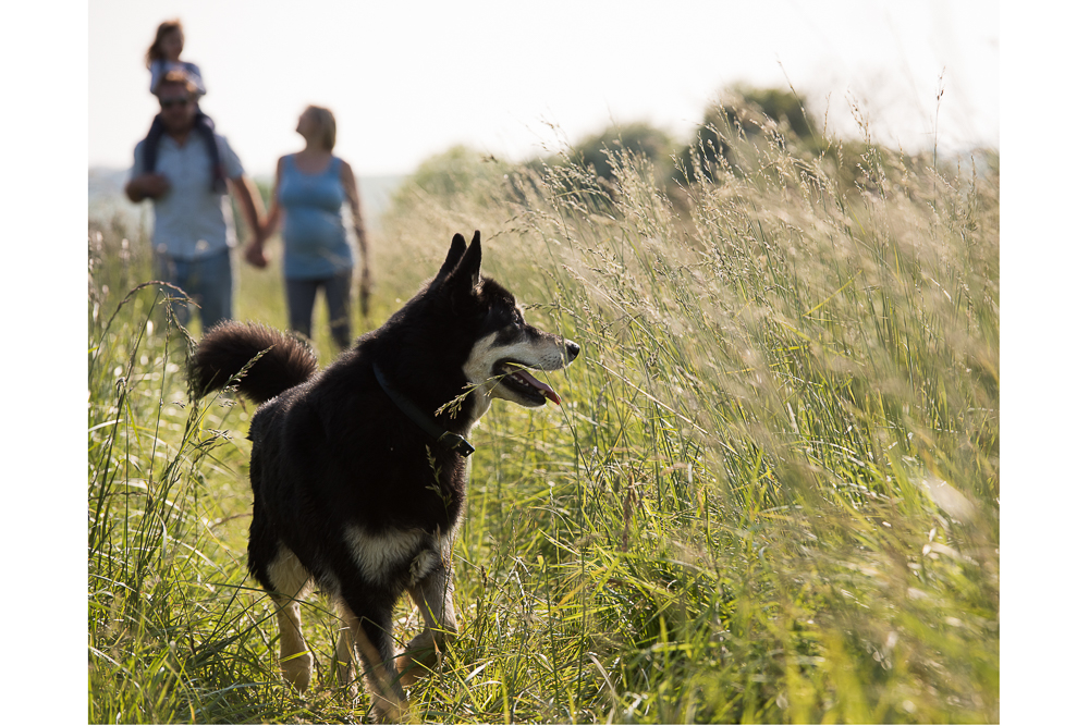 Family dog walk in Sussex